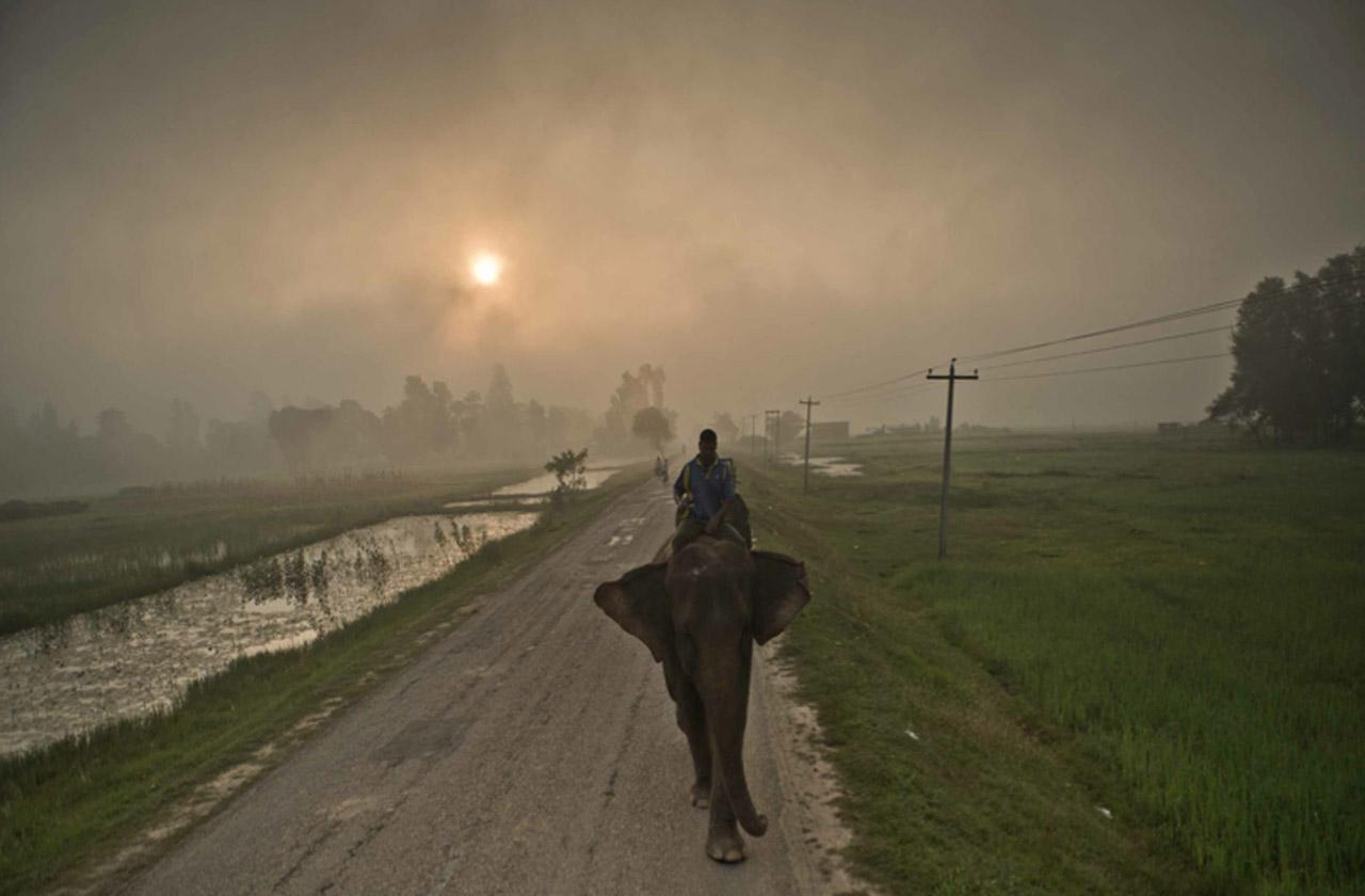 Morning Mist 2 8